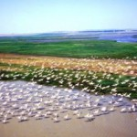 Богатая флора и фауна дельты Дуная
