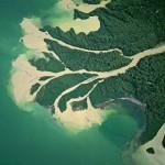 Эссе международной комиссии по защите дельты Дуная