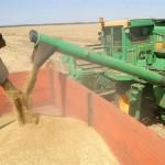 «Новый порядок экспорта пшеницы» в Приднестровье.