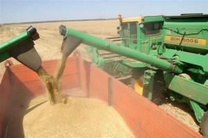 Правительство Приднестровья установило «особый порядок экспорта пшеницы»