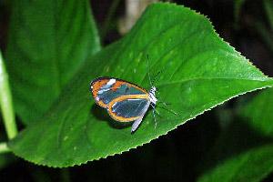 Экология Болгарии