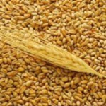 Логистика зерновых через терминал в Северной Корее – хороший вариант для Казахстана.